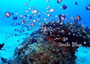 小さなサンゴの根に住む魚たち