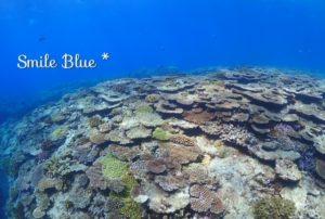 眼下に広がるテーブル上の珊瑚礁たち