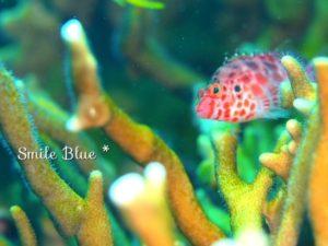赤白のまだら模様の魚
