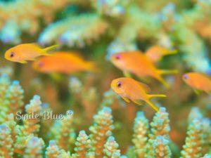 お魚の幼稚園