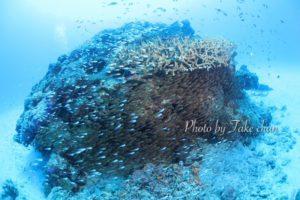 水納島のサンゴ礁と群れる魚達