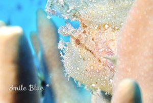 目がキラキラと宝石みたいな魚