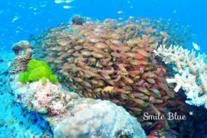 珊瑚の隙間から飛び出てくる魚