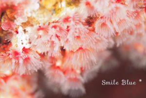 満開の桜の花を思わせる水中の生き物