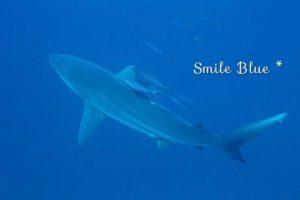 体長2.5mはあったサメ