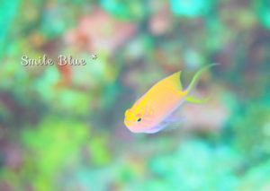 黄色&ピンクのグラデーションが綺麗な魚の子供