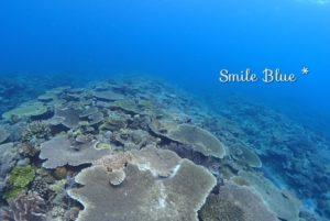 ダイバーの眼下に広がる美しいサンゴ礁