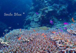 サンゴの上を泳ぐオレンジと紫色の綺麗な魚たち