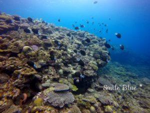 万座の綺麗なサンゴ礁と群れる魚たち