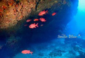 真っ赤で目の大きな魚