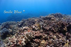 浅場のサンゴ礁と色とりどりの魚たち!