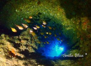 ライトの光を浴びてキラキラ光る魚たち