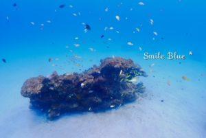 真っ白な砂地とサンゴの根・群れる魚たち
